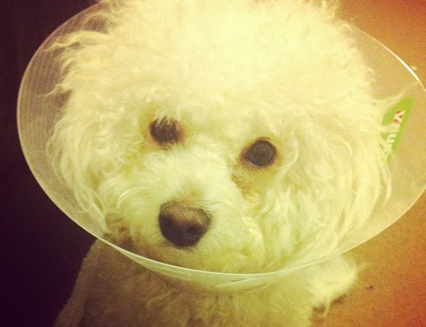Poorly Puppy….
