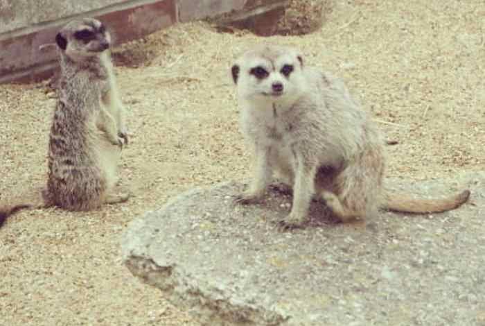 Family Days Out – Monkey Haven, Isle of Wight….