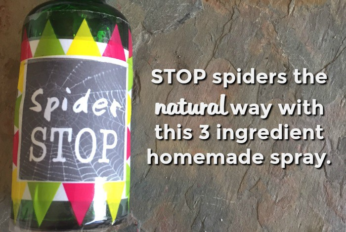 STOP spiders the natural way with this three ingredient homemade spray....