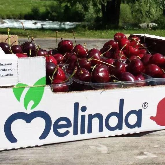 Melinda Ciliegie hp