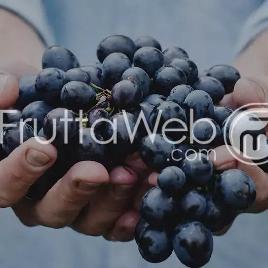 fruttaweb black friday