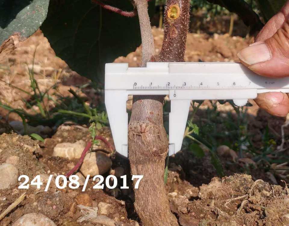 Ceradini-portainnesto-moria