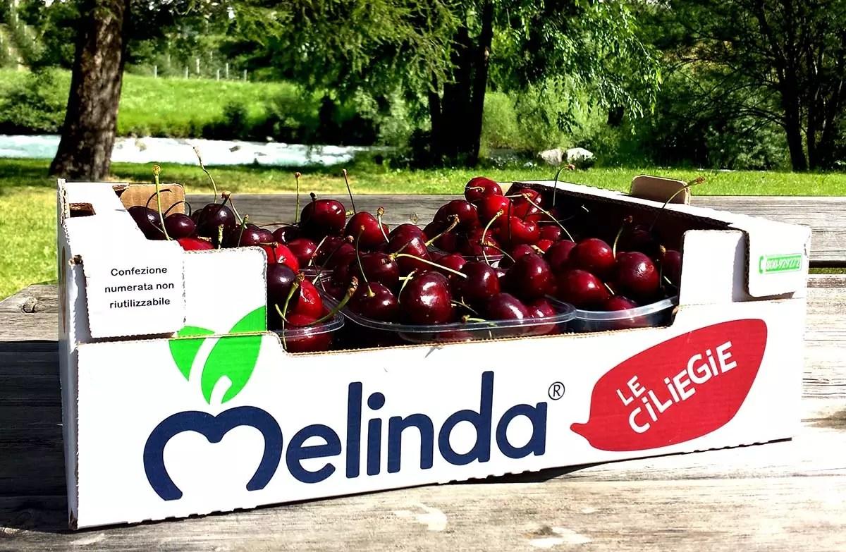 Melinda ciliegie