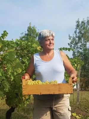 Manfredini uva Saslà