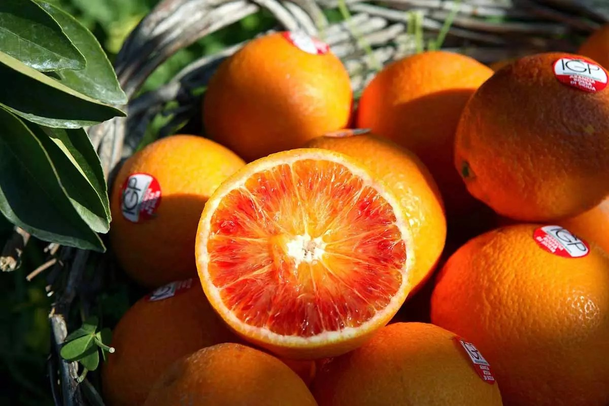 arance rosse igp