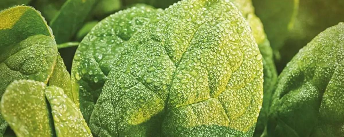 Boscolo-Cultiva-insalate-baby-2020