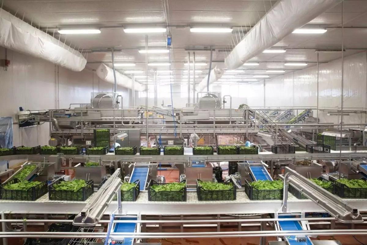 Boscolo-Cultiva-stabilimento-insalate-2020
