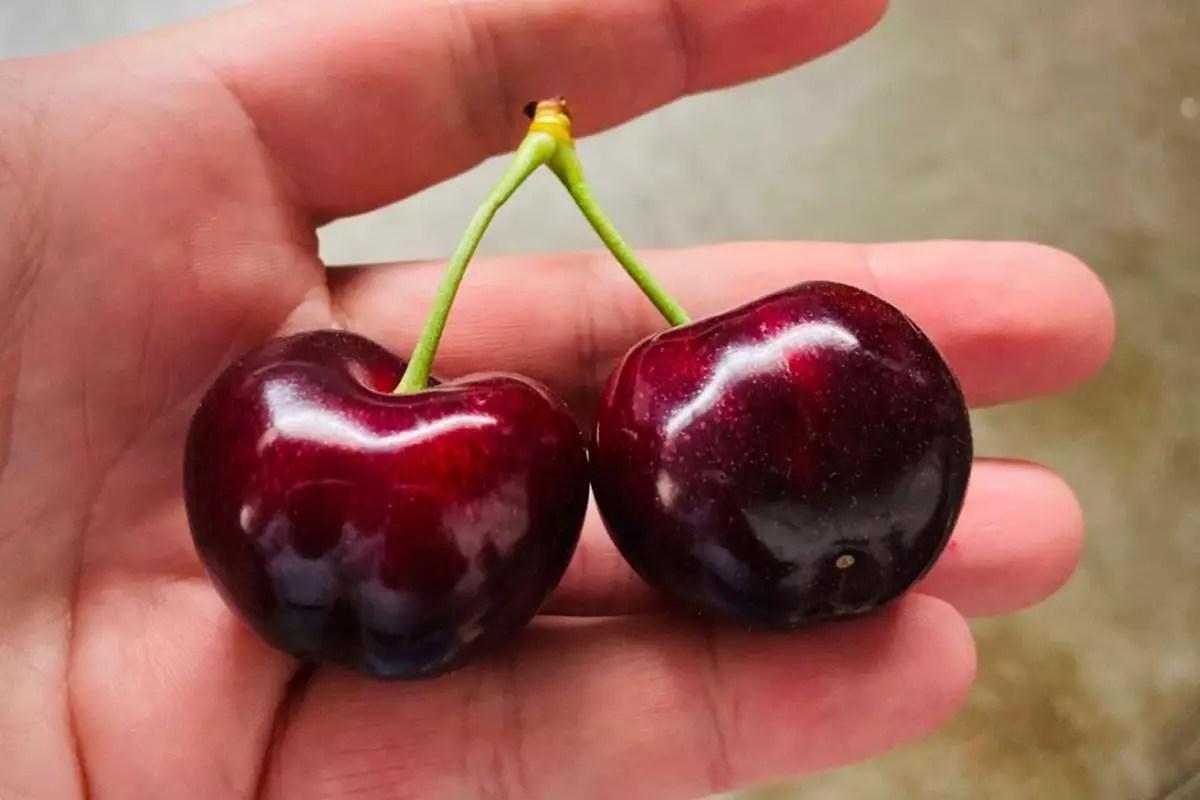 Rivoira-ciliegie-frutti-2020