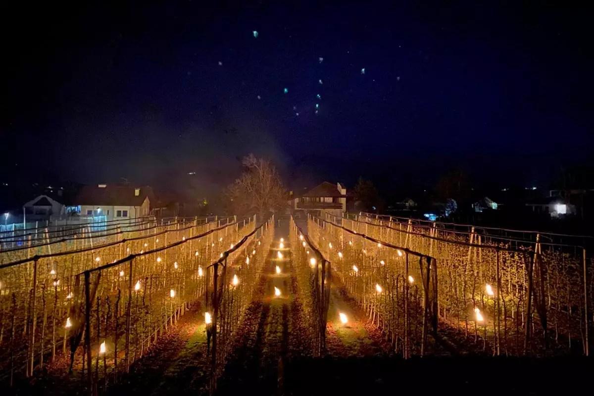 VOG-mele-candele-gelate-Alto-Adige