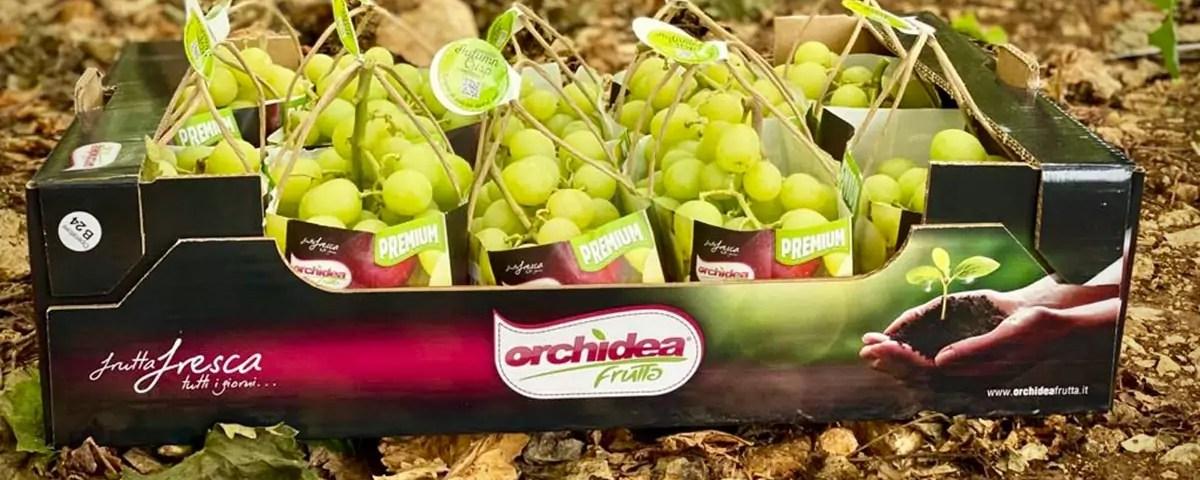 Autumncrisp-Orchidea-Frutta-packaging