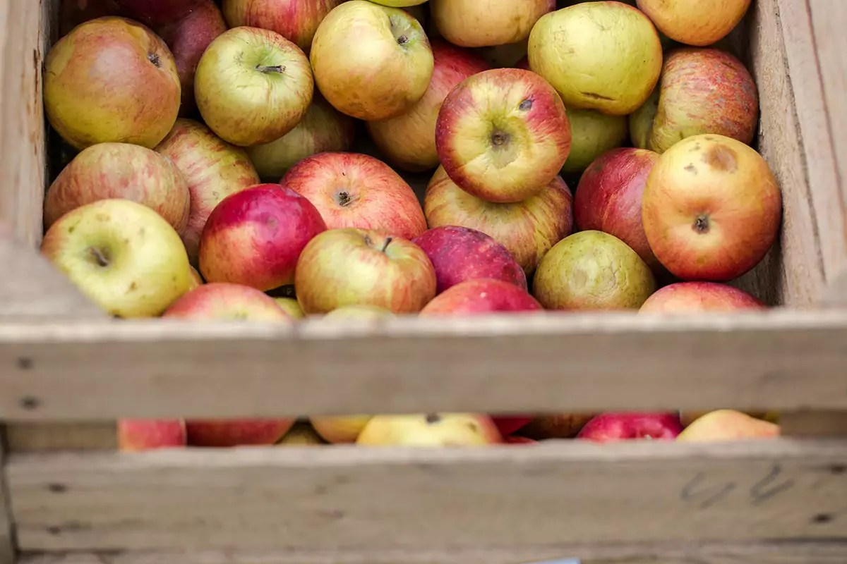 CosiPerNatura-frutta-mele-NaturaSi-non-calibrate