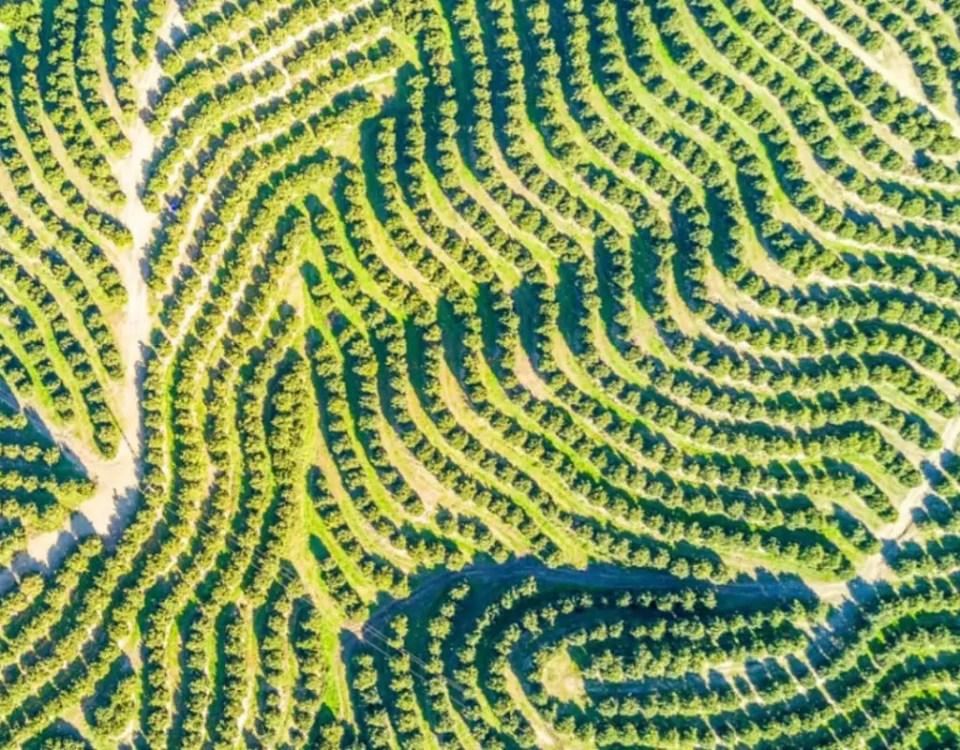Agrumi-Agricola-Lusia-alberi-frutta