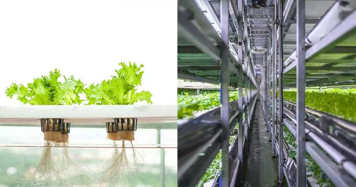 vertical farm idroponica