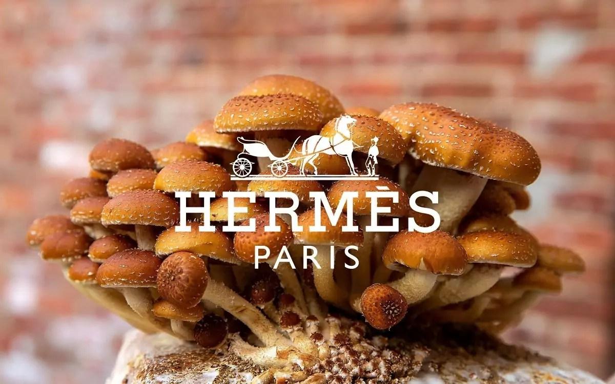 Hermes fungo