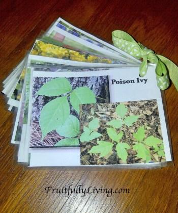 Poisonous plants2
