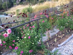 flowerssept