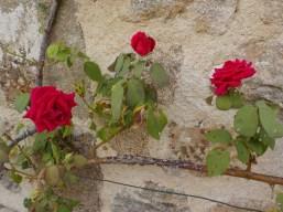 rosecourtyardaugust