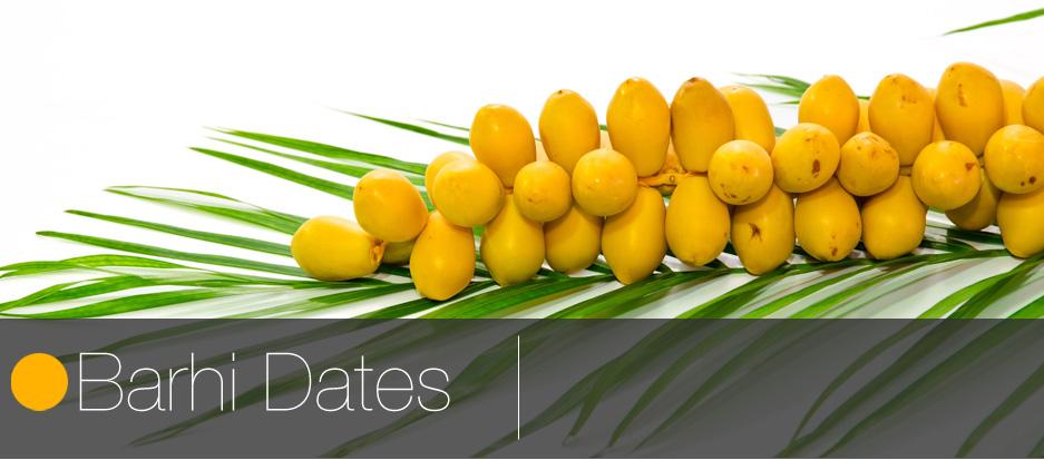 Barhi Dates Season 2014 « Fruit Link Fresh Produce