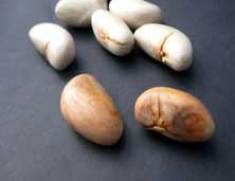 Jackfruit-Seeds