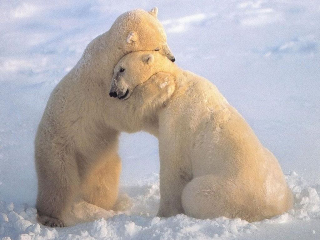 Bear-Hug-