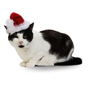 Christmas Cat Santa Hat