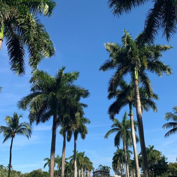 Liz Olusesan West Palm Beach /Palm Trees travel