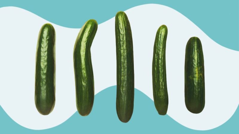 penis shape cucumber