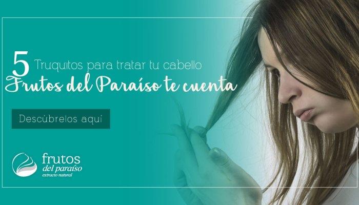 5 Truquitos para tratar tu cabello seco   Frutos del Paraíso te cuenta