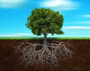 alberi e radici