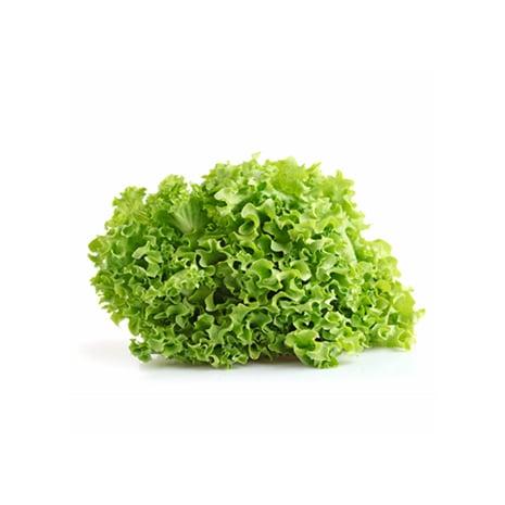 Lechuga Crespa Verde