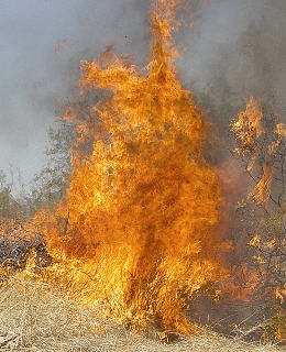 Buffelgrass fire in Tucson, Arizona. Photo taken by courtesy of Kevin Kincaid, Rural/Metro For Forest Service