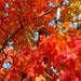 Fall Colors: Logo 5