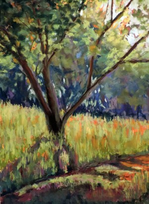 Elm in the Sun, by Amy Bekier