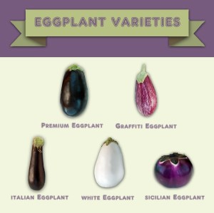 Eggplant Varieties