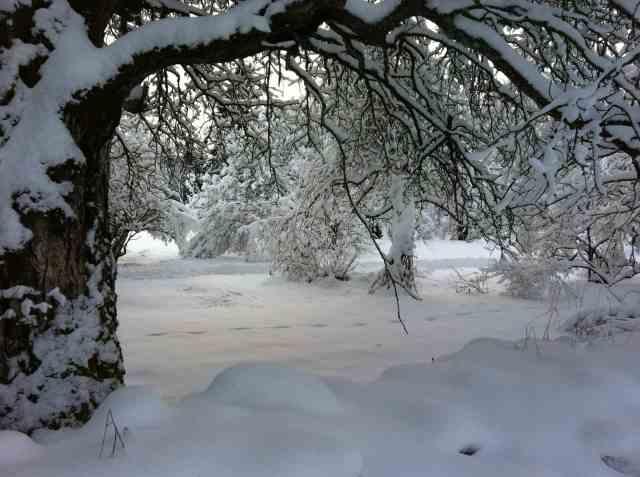 Vinter132