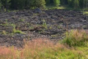 Stubbarna brutna och marken skotad. Men än går det inte att plöja. Alldeles för många gropar och rötter. Nyodling är ett projekt i många steg.