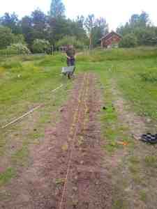En av mina första uppgifter på gården var att plantera timjan.