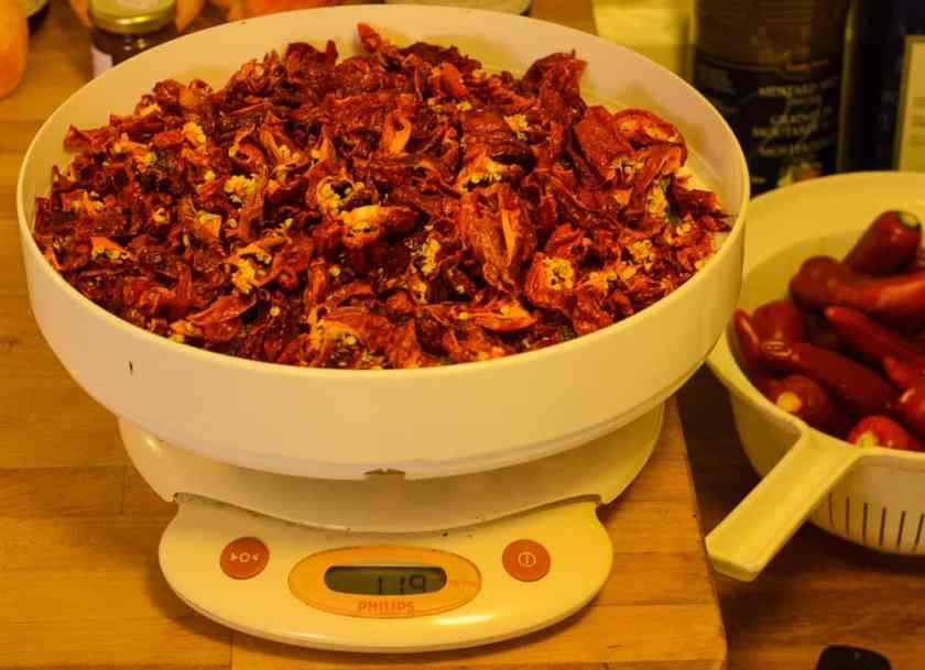 Torkning är ett utmärkt sätt att bevara chili. Här är ett kilo torkad Habanero. Torrsubstansen (TS) är drygt 11 procent för habanero – det vill säga hur mycket som finns kvar när det är torkad.