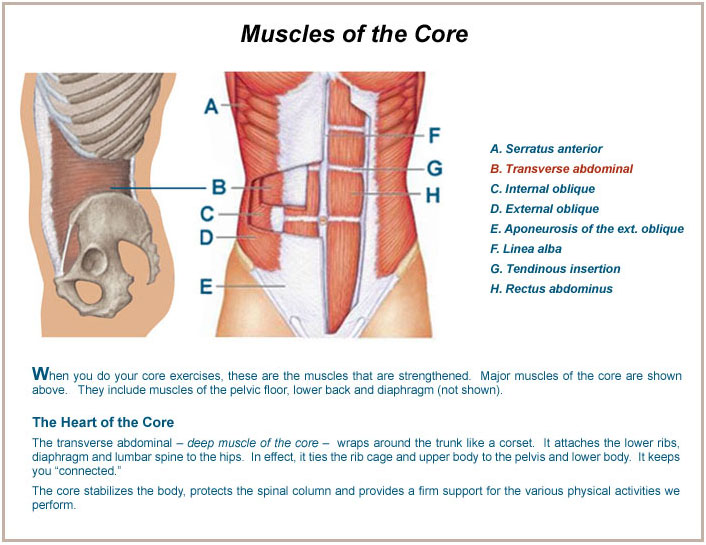 The anatomy of human core muscles. Learn how to strengthen these muscles and the benefits from doing so for your health and body!