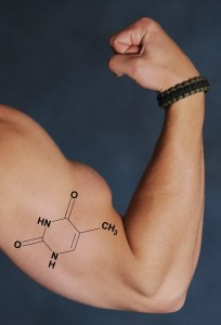 Protein builds lean muscle tissue
