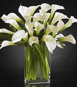Simplicity Luxury Calla Lily Bouquet - 20 Stems - VASE INCLUDED- Shown