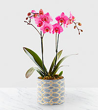 Orchid Flowers Send Red And Purple Orchid Bouquets With FTD