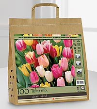 Fall Tulip Bulbs for Spring Color - 100 Bulbs