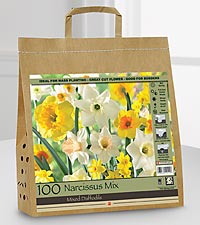 Fall Daffodil Bulbs for Spring Color - 100 Bulbs