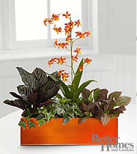 The FTD® Vibrant Beauty Windowbox by Better Homes and Gardens®