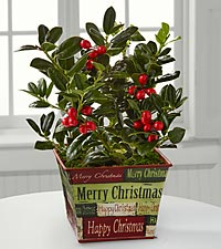 Happy Holly-Days Plant