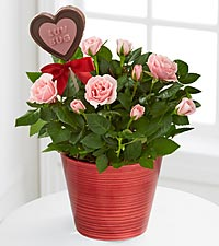 Love Blooms Mini Rose with Chocolate Lollipop