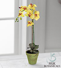 Jane Seymour Silk Botanicals Yellow Phalaenopsis  Orchid