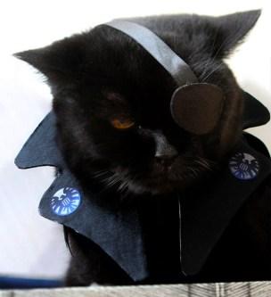 Nick-Fury-Cat-Cosplay