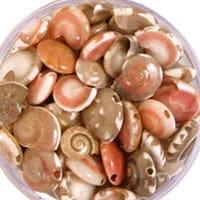 shell_beads